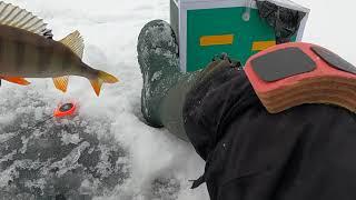 Плотва и окунь в глухозимье 2021 Рыбалка на мормышку