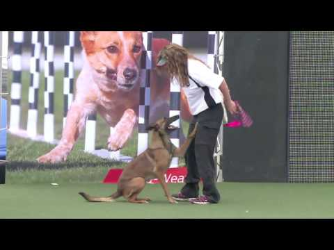 Full Diving Dog Competition - 2016 Purina® Pro Plan® Incredible Dog Challenge® Western Regionals