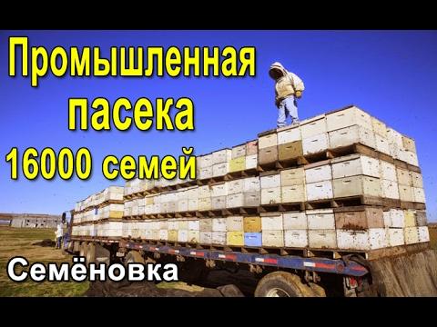Купить семена фацелии по низкой цене. ✿✿✿ интернет-магазин семян цветов florium ➨ доставляем семена фацелии почтой по всем городам украины бесплатно. ❧❧❧ огромный выбор качественных семян цветов из голландии и украины. ☑ заказы по тел. ☎ (095)480-29-65.