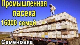 Промышленная пасека 16000 семей, Украина Семёновка Пчеловодство(Организовывается промышленная пасека в 16000 семей, Полтавская область Семёновский и Хорольский район. Так..., 2017-02-21T12:37:53.000Z)