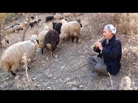 شمشال-Kurdish culture