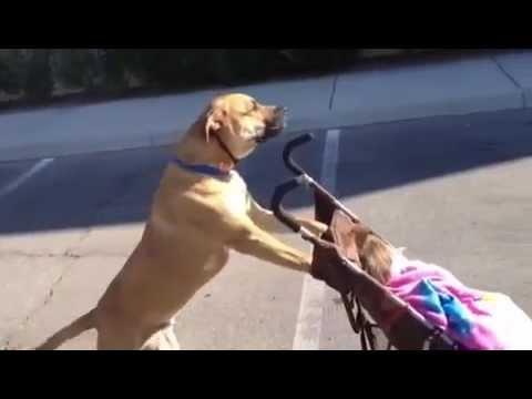 Dog Walking Meme