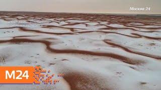 """Смотреть видео """"Климат-контроль"""": солнечная погода пришла в столицу - Москва 24 онлайн"""