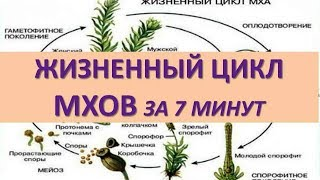 ЖИЗНЕННЫЙ ЦИКЛ МХОВ ЗА 7 МИНУТ (+ задания из ЕГЭ)