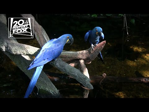 RIO 2 - World Wildlife Fund PSA