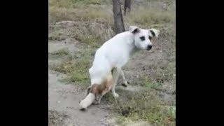 Спасение  собаки, в которую  стреляли и проехали на машине