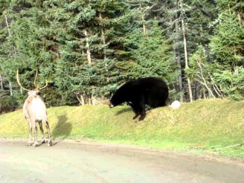 ours noir et