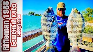 Ловим рыбу на блох Бешеный клев Как поймать Sheepshead