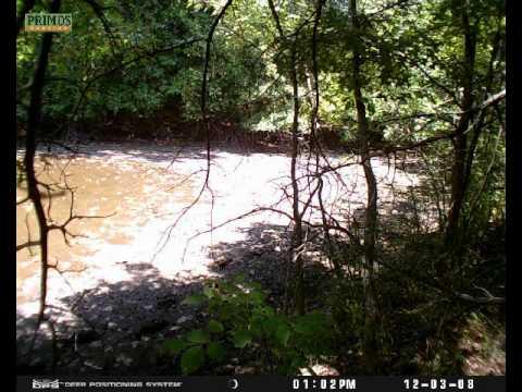 Primos Dps Game Camera Watering Hole Trail Cam Trailcam Plotwatcher Plot Watcher Deer