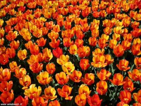 Schumann - Waldszenen 3 Einsame Blumen - Solitary Flowers - Fiori Solitari