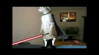 Repeat youtube video Jedi cats fights compy star wars .wmv