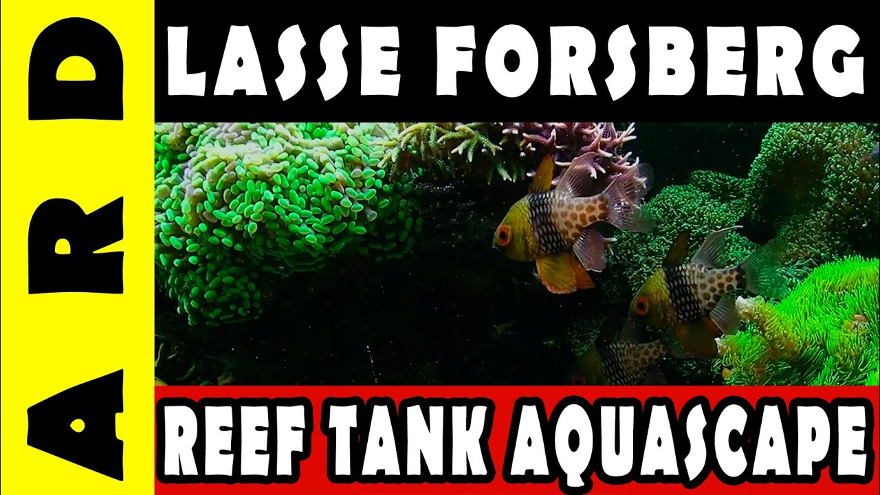 Lasse Forsberg Reef Tank - Aquascape review - YouTube