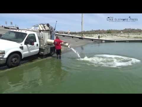 Stocking Lake Elsinore With Fish 2015 - Largemouth Bass & Catfish