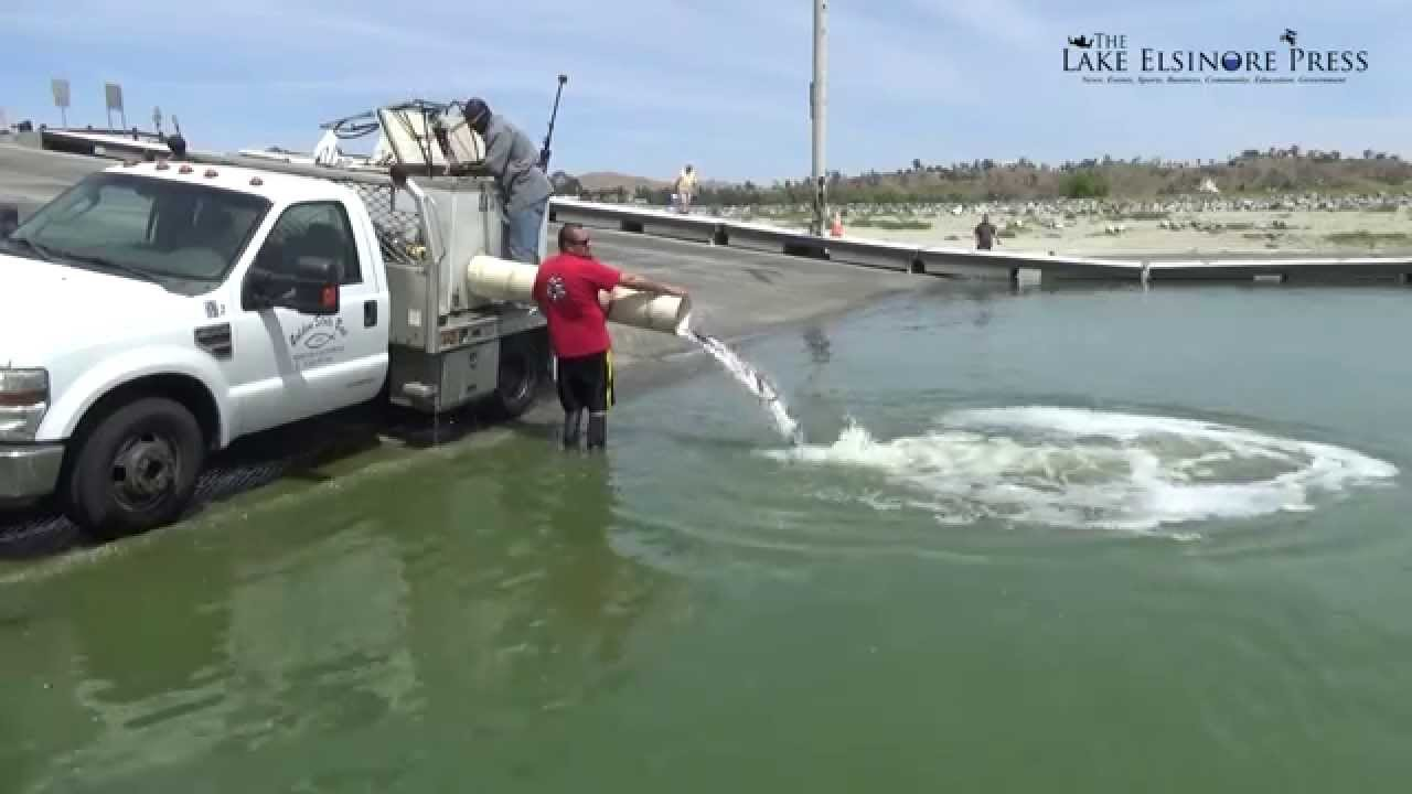 Stocking lake elsinore with fish 2015 largemouth bass for Truck fishing accessories