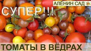 видео Выращивание помидоров в мешках