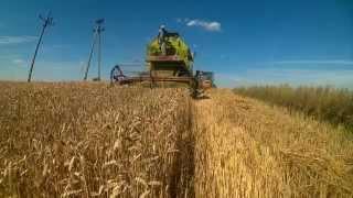 żniwa 2015 pszenica claas mercator 50 renault 90 34
