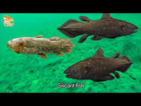whole lot of fish dating