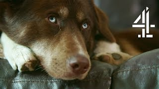 Mother of Two Adopts Dog to Help Children After Divorce | The Dog House