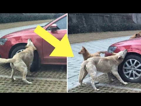 Man Kicks A Stray Dog But It's What The Stray Dog Does That Breaks The Internet!