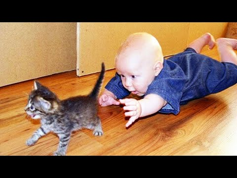 Funniest Baby And Cat  - Funny Baby Video