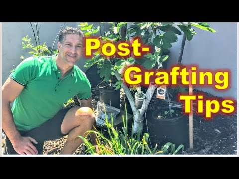 POST-GRAFTING CARE TIPS | 1. Control The Flow | 2. Balance The Strengths | 3. Disease & Pest Control