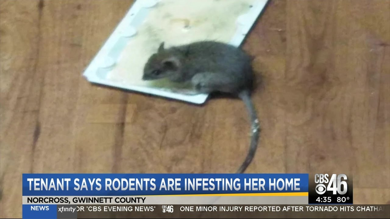 Rodent filled rental