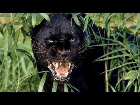 Дикая природа Амазонки. Колыбель жизни. National Geographic на русском - Видео онлайн