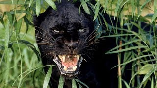 Дикая природа Амазонки. Колыбель жизни. National Geographic на русском