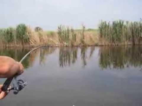 ловля амура на дону в ростовской области