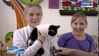 Милые котики встречают гостей в барнаульском котокафе