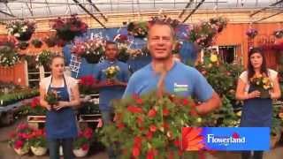 Flowerland Flowerman