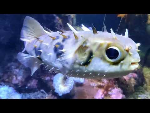 Real Finding Nemo Fishes   SEA LIFE Kelly Tarlton's Aquarium   Auckland's Iconic Aquarium