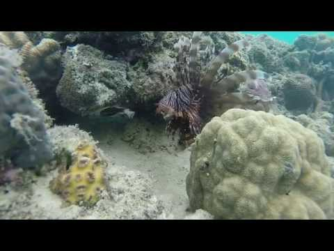 Solomon Islands Dive Trip - July 2014
