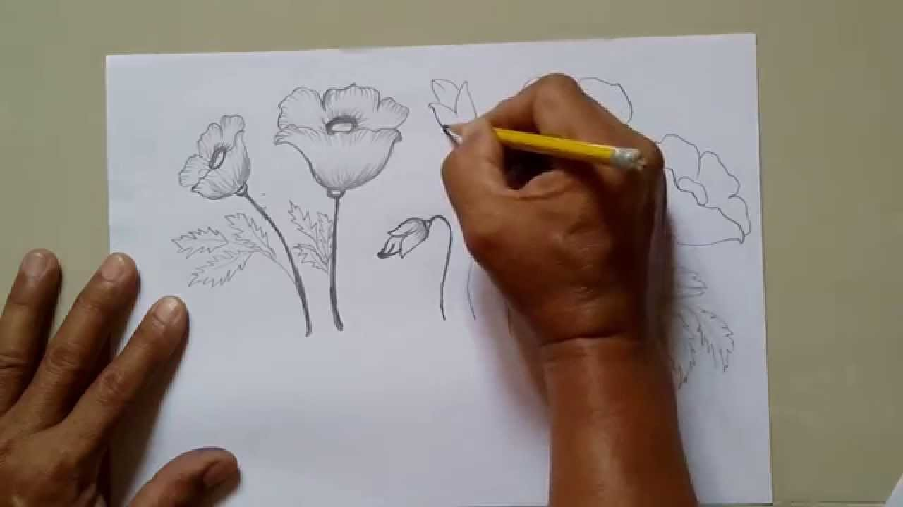 How To Draw A Poppy Flower Easy Drawing Tutorials Youtube