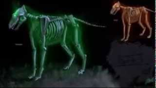 wolves this is halloween (only sound)