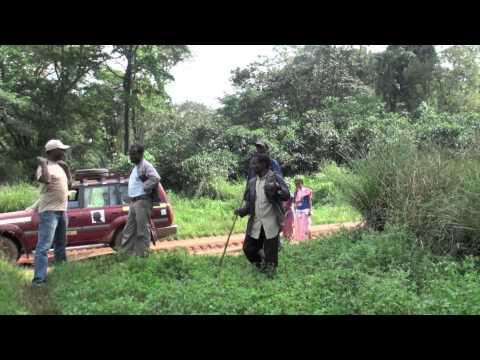 ETIOPIA, LA TERRA DEL CAFFE'   l'albero di bunna…