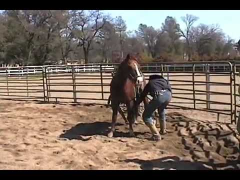 GIRL RIDES HORSE BRIDLELESS AND BAREBACK FOR FATHER WHO DIED 24 DAYS BEFORE from YouTube · Duration:  6 minutes 50 seconds  · 251.000+ views · uploaded on 29.11.2012 · uploaded by Victor D. Romero