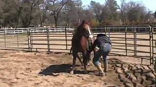 Bucking Out a Colt Day 1 Cutting Edge Colts