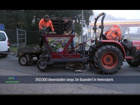 350 000 bloembollen langs De Baandert