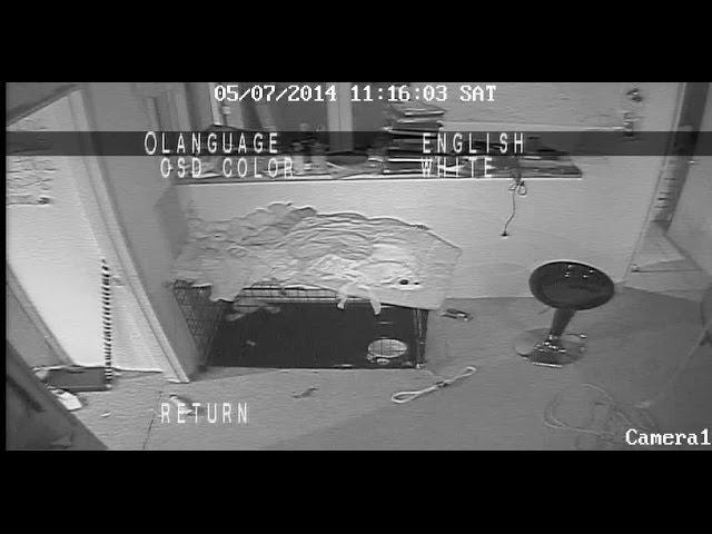 Videos Show Craigslist Killer Preparing Michigan Home Before
