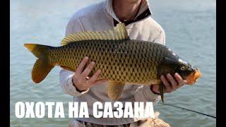 Рыбалка на Сазана весной 2019 (На что ловить? Где? Как?)