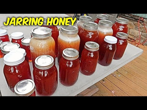 How Much Honey Did I Get? - Honey Harvest Part 3