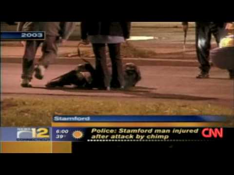 Chimp killed after rampage