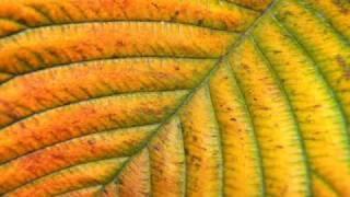 Download Coldcut - Bare Leaves (So Classic version) MP3 song and Music Video