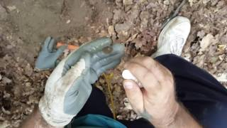 """Metal detecting a Cherry 1894 Barber dime..on """"Penny Lane"""""""