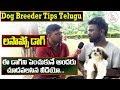 Lhasa apso Training Tips || Dog Breeder Tips in Telugu || Good food for Dogs |  Eagle Media Works