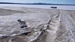Самое смешное видео Я РЖАЛ ПОЛЧАСА смешные животные собаки кошки ПРИКОЛЫ С ЖИВОТНЫМИ HAPPY DOG