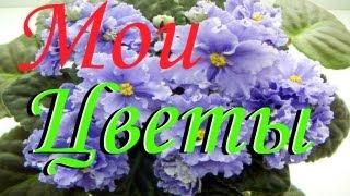 VLOG: Мои ЦВЕТЫ - моё хобби (фиалки, герань и многое другое)(Очень люблю цветы в этом видео я вам покажу свои домашние цветы: фиалки, герань и многое другое. Надеюсь..., 2013-06-02T06:41:02.000Z)