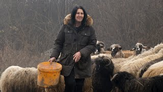 Sanela kupila ovce, kombi, napravila štalu
