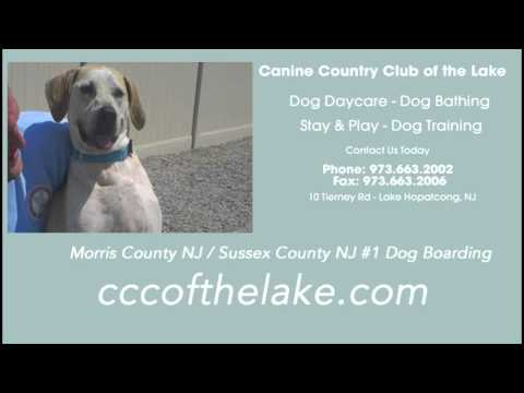 canine-country-club-of-the-lake